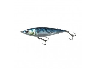 Blue Mackerel